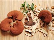 Bắc Giang: Ứng dụng công nghệ mới trong nhân giống và sản xuất nấm ăn, nấm dược liệu