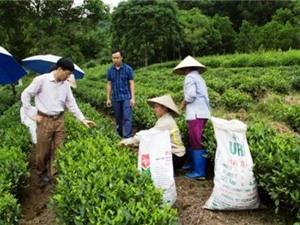 Bắc Kạn: Kiểm tra dự án phát triển cây chè và cây lê tại các huyện: Ba Bể, Chợ Mới, Pác Nặm, Ngân Sơn
