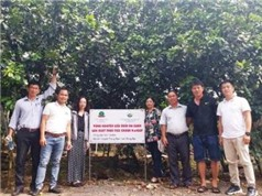 Đồng Nai: Sản xuất bưởi da xanh theo hướng thực hành nông nghiệp tốt