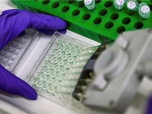 Khám phá thành công bản đồ phân tử gene trong phôi chuột