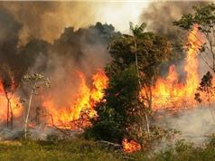 Số vụ cháy rừng ở Amazon tăng kỷ lục