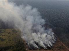 Cháy rừng Amazon: Hệ quả từ chính sách môi trường?