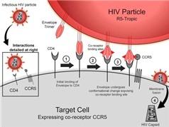 Phát hiện đột biến gene thứ hai liên quan đến khả năng kháng HIV