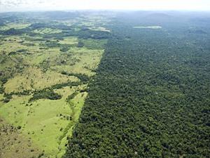 Hiệu quả 10 năm tham gia chương trình giảm phát thải từ mất rừng và suy thoái rừng