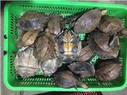 Kẽ hở luật pháp với trang trại động vật hoang dã ở Việt Nam, Lào, Campuchia