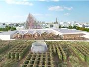 Trang trại trồng rau trên nóc nhà lớn nhất thế giới