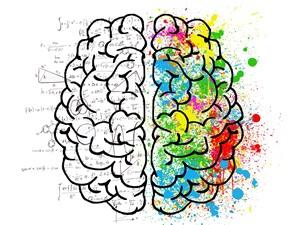 Não bộ ước lượng như thế nào?