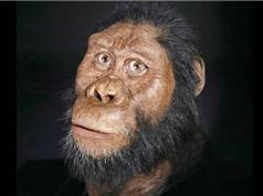 Phát hiện hóa thạch tổ tiên lâu đời nhất của con người
