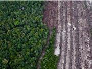 Giảm phát thải từ mất rừng và suy thoái rừng: Công nghệ vào cuộc