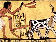 Con người đã biến đổi Trái đất từ hàng nghìn năm trước
