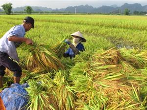 Công bố sổ tay xuất khẩu nông thủy sản sang thị trường Trung Quốc