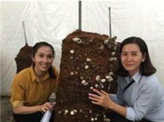 An Giang: Thử nghiệm mô hình trồng nấm rơm dạng trụ tại huyện Châu Thành