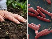 Bệnh vi khuẩn ăn thịt người và cách phòng chống