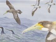 Phát hiện hóa thạch loài chim biển lâu đời nhất trong lịch sử