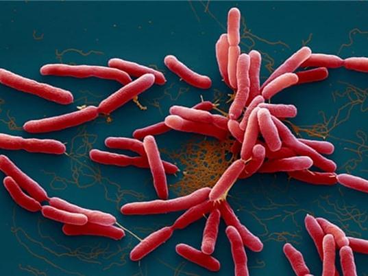 """Vi khuẩn gây bệnh Whitmore có thật sự """"ăn thịt người""""?"""
