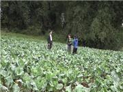 """Lạng Sơn: Rau Tân Liên - Gia Cát đón nhận nhãn hiệu tập thể """"Cao Lộc"""""""