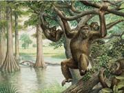 Tổ tiên loài người chưa bao giờ đi bằng bốn chân?