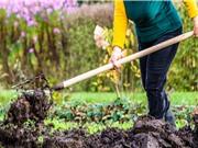 Phân bón: Chìa khóa của nông nghiệp xanh