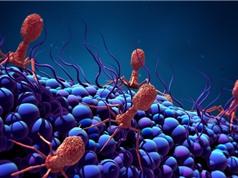 Virus hướng đích - vũ khí chống nhiễm trùng không cần kháng sinh