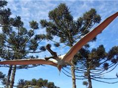 Phát hiện hóa thạch khủng long 96 triệu năm trước tại Australia