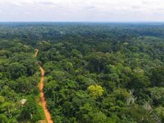 Hé lộ bí mật của sự cộng sinh giữa các loài ở rừng cận nhiệt đới