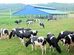 Kiểm soát dịch bệnh: Thách thức lớn nhất của ngành chăn nuôi Việt Nam
