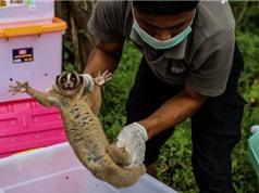 Thương mại động vật hoang dã gây suy giảm loài nghiêm trọng