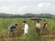 Lạng Sơn: Xây dựng mô hình sản xuất Măng tây xanh gắn với tiêu thụ sản phẩm tại huyện Lộc Bình