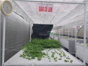 Vĩnh Phúc: Ứng dụng công nghệ khí canh trong nhân giống một số cây dược liệu có giá trị kinh tế cao