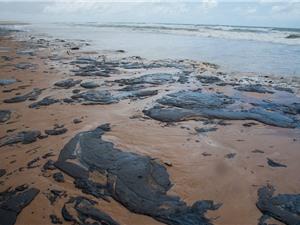 Brazil dọn dẹp hơn 100 tấn dầu tràn cứu động vật biển