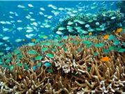 Axit hóa đại dương có thể xóa sổ hàng loạt sinh vật biển