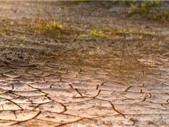 Mỹ chế chất giữ ẩm để chống hạn cho cây trồng