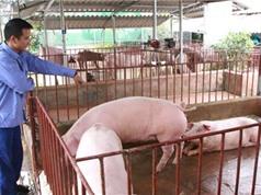 Mức tăng tỉ trọng chăn nuôi mới đạt một nửa