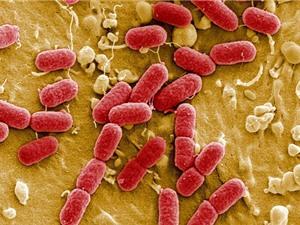 Báo cáo của CDC tuyên bố: Nước Mỹ đã bước vào thời kỳ hậu kháng sinh