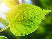 Phát hiện cơ chế quang hợp giúp đáp ứng nhu cầu lương thực thế giới