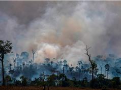 Mỗi phút, rừng Amazon mất đi diện tích tương đương hai sân bóng đá