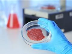 Thịt nhân tạo tổng hợp từ không khí