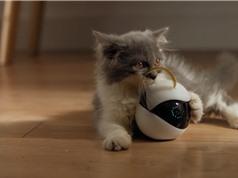 Robot giữ mèo khi chủ vắng nhà