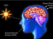 Phát hiện 3 loại tế bào giúp não phân biệt ngày và đêm