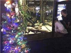 Năng lượng từ lươn sống thắp sáng cây thông Giáng sinh