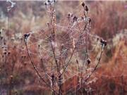 Khám phá nguyên tắc kỳ diệu của lưới nhện