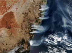 250 triệu tấn CO2 thải ra từ các vụ cháy rừng ở Úc