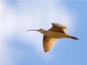 Những con chim đang thay đổi thời gian di cư do biến đổi khí hậu
