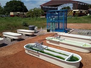 Phát triển tảo euglena để làm nhiên liệu sinh học