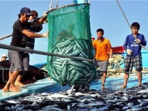 Nguồn lợi thủy sản của Việt Nam suy giảm