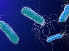 Thêm bước tiến trong cuộc chiến giữa thuốc kháng sinh và vi khuẩn kháng thuốc