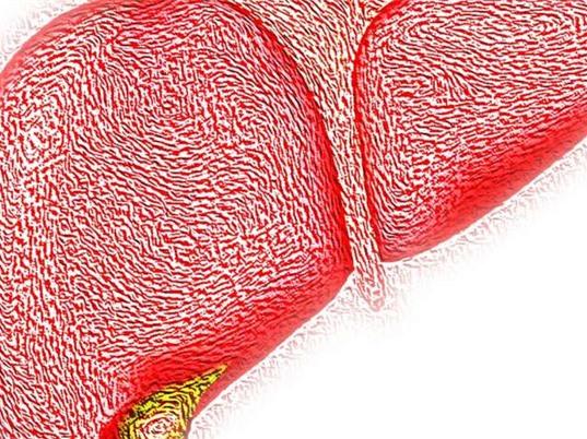 Protein tuổi thọ SIRT6 có tác dụng phòng bệnh gan nhiễm mỡ