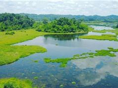 Đa dạng hóa nguồn đầu tư cho hệ thống rừng đặc dụng Việt Nam: Cơ hội và những rủi ro