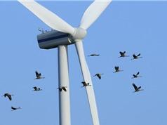 Điện gió: Tua-bin cao và cánh quạt ngắn giúp giảm thiểu ảnh hưởng đến các loài chim