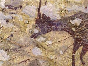 Phát hiện những bức tranh hang động 44 nghìn năm tuổi